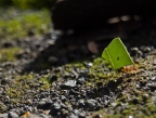 Leaf Cutter Ants: The Farming Insects