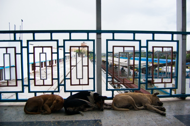 """Trained Dogs"" Hanging out at a random train station."